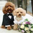 130x130 sq 1358729402481 doggiewedding