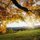 130x130 sq 1255147871953 autumnleaves