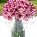 130x130 sq 1363911852735 carnations2