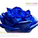 130x130 sq 1363913373155 blue2
