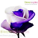 130x130 sq 1363913381551 purplewhite