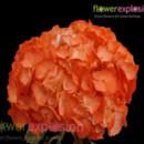 130x130 sq 1365091953921 regular tinted orange