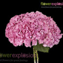 130x130 sq 1365091992380 regular pink