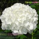 130x130 sq 1365091996897 jumbo white1