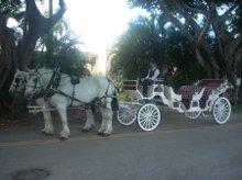 220x220 1254496589353 horsecarriage
