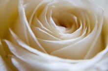 220x220 1257186329180 rose