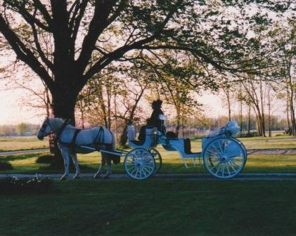 photo 2 of Buggies and Things Horse Drawn Carriage Service