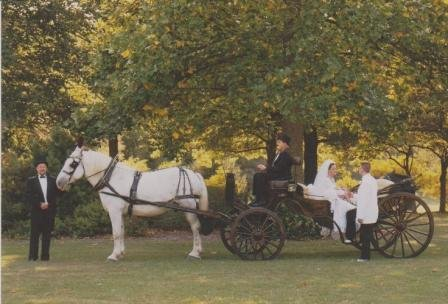 photo 7 of Buggies and Things Horse Drawn Carriage Service