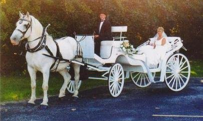 photo 6 of Buggies and Things Horse Drawn Carriage Service
