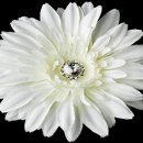130x130 sq 1278610219306 diamondwhitestarburstdahliaflowerhairclip