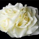130x130 sq 1278610253978 whitegardenroseclusterflowerhairclip
