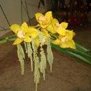 130x130 sq 1263008498623 orchidbouquet