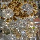 130x130 sq 1331178780814 roastedpecansoncrystal