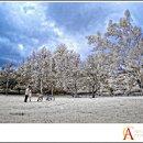 130x130 sq 1302895110662 sanfernandovalleyengagementphotographermv12