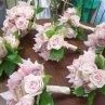 130x130_sq_1264955246635-bouquets