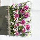 130x130 sq 1267508588032 lavendargardenscape