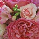 130x130_sq_1267510324985-pinks