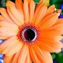 130x130 sq 1278378109310 st.louisweddingphotographybyaleciahoytphotographer0010