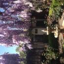 130x130 sq 1375305728383 wisteria 2013 with fountain