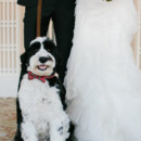 130x130 sq 1402101461937 16   fairmont banff springs wedding dog