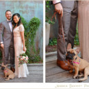130x130 sq 1487907963318 french bull dog wedding brooklyn