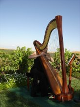 Lauren C. Sharkey, Harpist photo