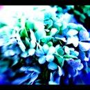 130x130 sq 1268354784692 flores