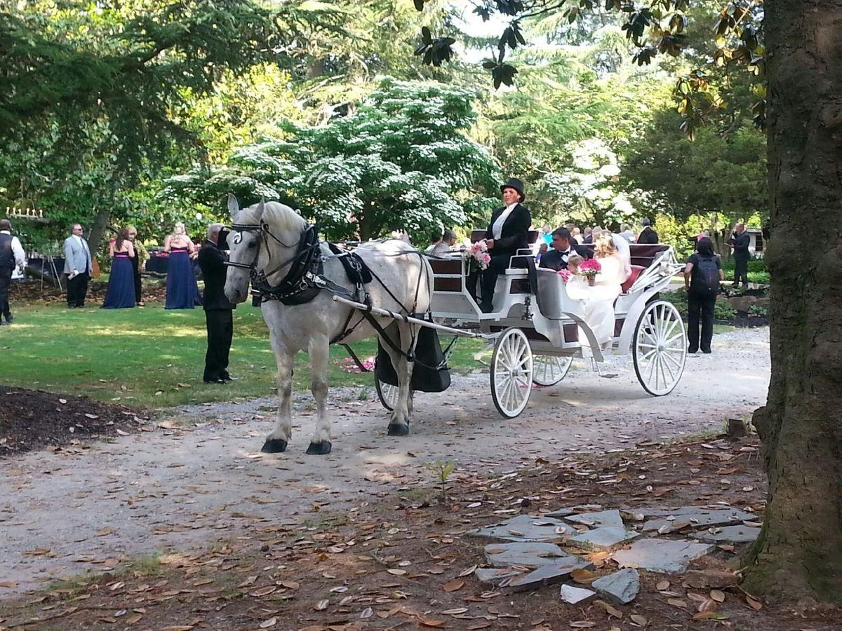 Carolina Horse And Carriage Transportation Landrum Sc Weddingwire