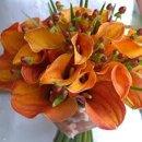 130x130_sq_1319740473195-orangecala