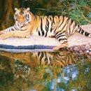 130x130_sq_1268842116063-tigerreflection