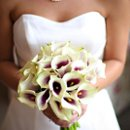 130x130_sq_1268917794272-bridalbouquetweddingflowerscallaliliespurpleandgreen