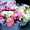 130x130_sq_1281367114270-flowers