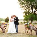 130x130 sq 1389127794715 star hill ranch wedding donkey