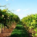 130x130 sq 1355856041600 vinesforbrochure