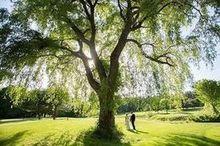 220x220 1488147081 2321916f8d3b4018 june 4  2016 willow tree