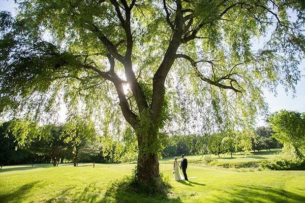 600x600 1488147741605 june 4 2016 willow tree