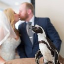 130x130 sq 1465587431091 bride and groom penguin a