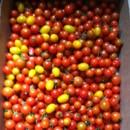 130x130 sq 1474914667656 38. tomatoes