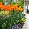 96x96 sq 1452538254076 the frelinghuysen arboretum morris township nj 10