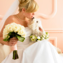 130x130 sq 1460571011976 bride and dog