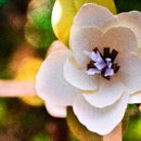 130x130 sq 1277688403384 paperflower600x300