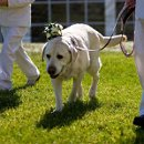 130x130 sq 1316710644751 weddingdetailsdog