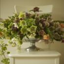 130x130 sq 1396977898693 bella fiori hellebore