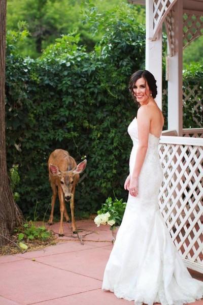1472068434539 Beautiful Bride  Her Doe  Manitou Springs wedding venue