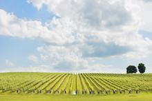 220x220 1442519206992 trump vineyard wedding