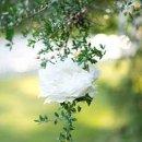 130x130_sq_1343416321980-outdoorflowersweb