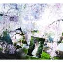 130x130 sq 1481049606410 cherry blossom
