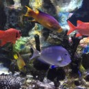 130x130 sq 1484585885090 aquarium