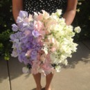 130x130 sq 1391790887036 sweet peas  ombre lavender to ivor