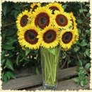 130x130_sq_1248117031930-sunflowers